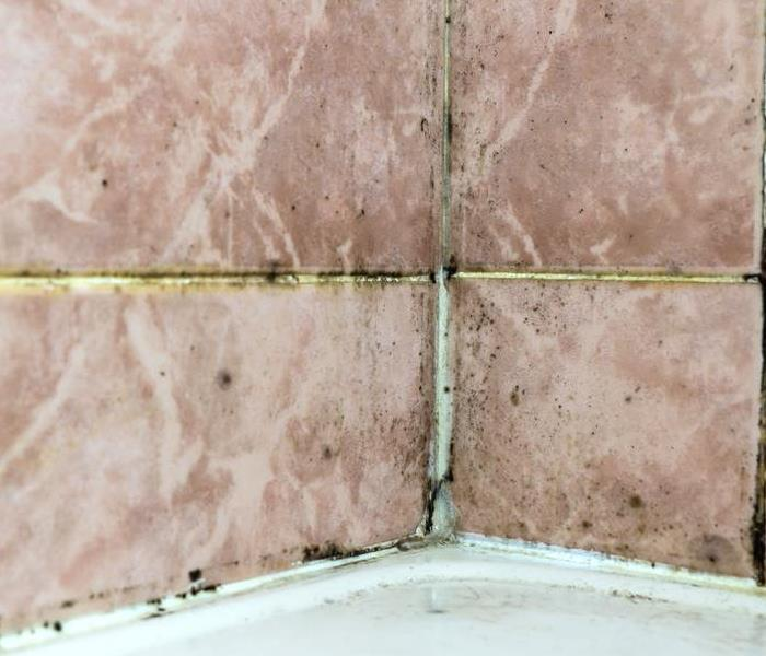 Mold Remediation Know the Mold Growth You're Dealing With