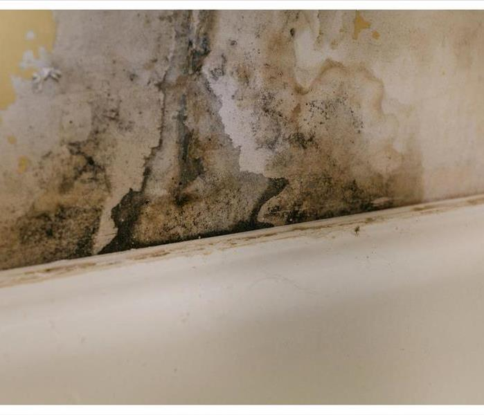 Black mold growth on a wall, wallpaper starting to come off